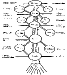 arboldeporfirio (1)