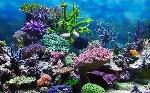 ddfc4-2560x1600_pod-vodoj-ryibki-korallyi-akvarium