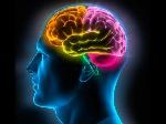 cerebro-memoria_0
