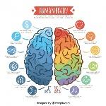 plantilla-infografica-de-cerebro-colorido_23-2147589524