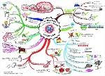 mapas-mentales-sociedad