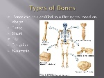 Types+of+Bones+Bones+can+be+classified+into+five+types+based+on+shape_