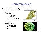 Deuteromycetes+Include+economically+important+molds+-Penicillium