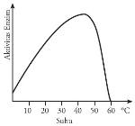 Grafik pengaruh suhu terhadap aktivitas enzim