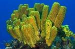 esponjas-marinas.