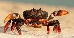 Que-Comen-Los-Crustaceos-2