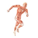 science-Muscle movement