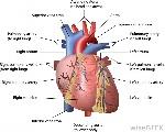 science-heart