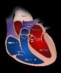 heart-2222964_960_720