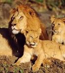animales 4