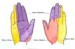 Dermatomas-mão