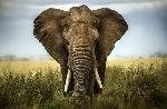 7-curiosos-datos-de-los-elefantes-y-su-modo-de-vida-6