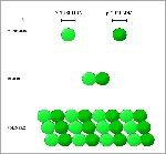 Polimerizzazione_Microtubuli