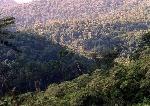 selva misionera2