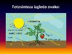 fotosinteza-izgleda-ovako-n