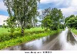 nasse-strasse-nach-dem-regen-in-landschaft-landschaft-aus-grunen-wiesen-im-fruhjahr-landliche-landschaft-m8e3da