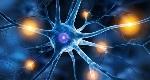 Neurone-anatomia-e-tipologie-di-neuroni-Introduzione-alla-Psicologia-3-680x365