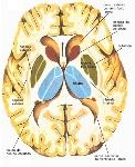 base-do-cranio