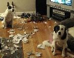 cachorros-pegos-no-flagra-9