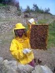 apicultore