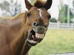 cara-caballo_0