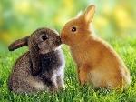 Conejo_-_rabbit