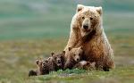 caracteristicas-generales-de-los-osos