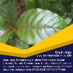 obat ambeien alami daun ungu