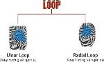 chung-van-tay-loop