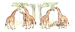 teoria-di-evoluzione-delle-giraffe