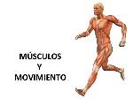 112msculos-y-movimiento-1-638