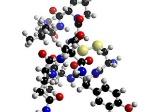 Hormona-310x232