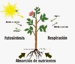 nutrición-plantas