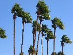palm-trees-360885_960_720