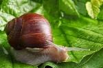 de-plagas--plantas--moluscos--animales_3210785