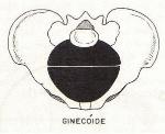 PELVE_GINECOIDE