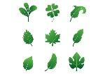 set-of-hojas-vector