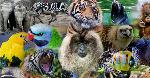 información-sobre-enciclopedias-de-animales