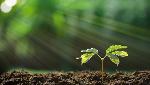 planta-sol-respiracao-0317-1400x800.jpg-itok-FJ6yNN4z