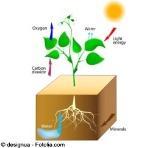 d_fotosintesis