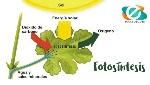 la-fotosíntesis