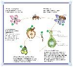 reproducción-en-plantas-con-flores