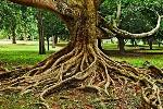 qué-significa-soñar-con-raíces
