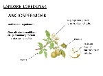 landareakphotosynthesis-10-638
