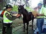 caballo_cochero