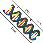 DNA en gen