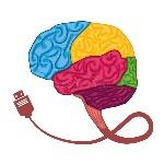 εικονί-ιο-εγκεφά-ου-ανθρώπινο-σχέ-ιο-οργάνων-σαν-ιανυσματικά-κύματα-73691062