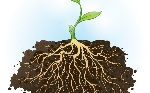 Plant-roots-go-to-extreme-lengths-to-find-water-800x500