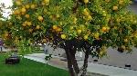 10-alberi-da-frutto-per-orto-giardino-e-balcone