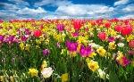 fiori-600x369
